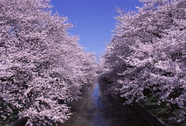 五条川(岩倉市)
